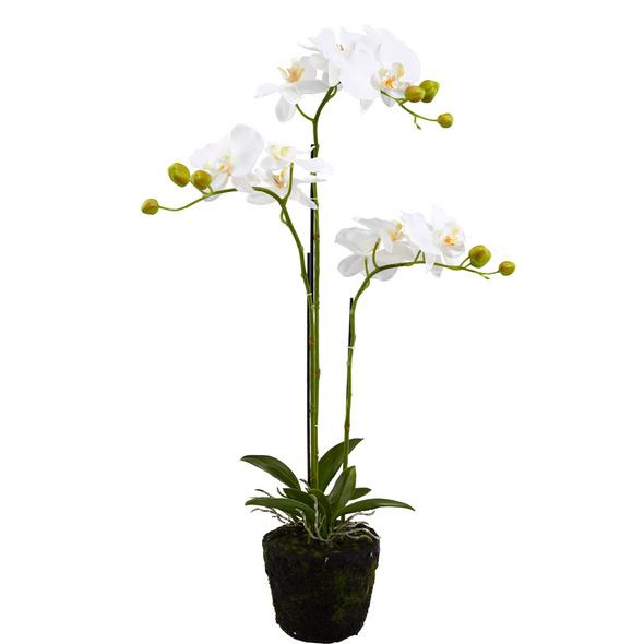 FLORISTA Orchideen, creme, 75cm