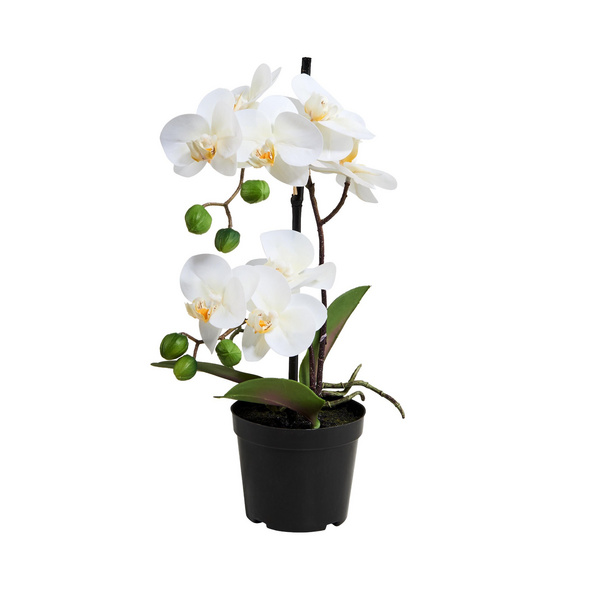 FLORISTA Orchidee im Topf 35cm, weiß