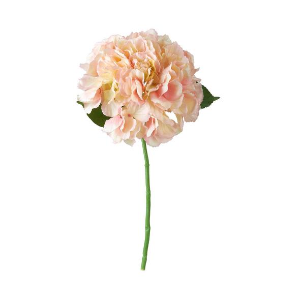 FLORISTA Hortensie, rosa