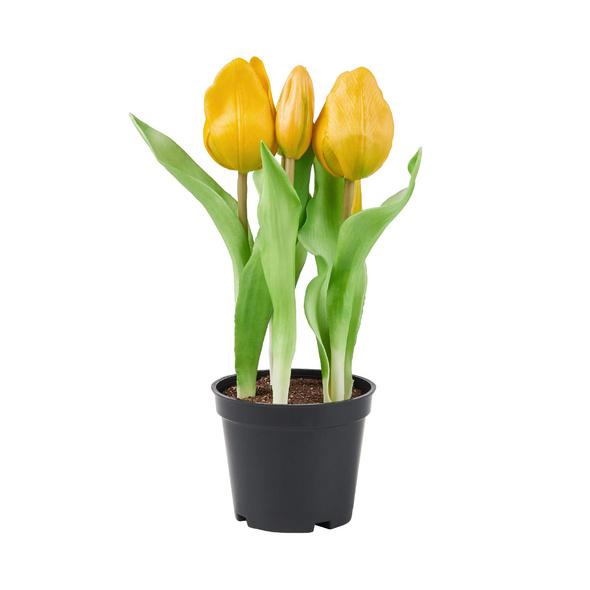 FLORISTA Real Touch Tulpen Topf, gelb