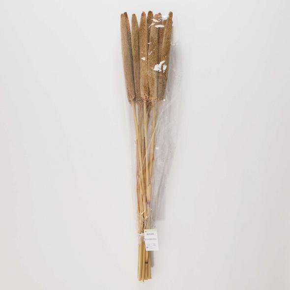 """FLOWER MARKET Zierpflanze """"Babla"""""""