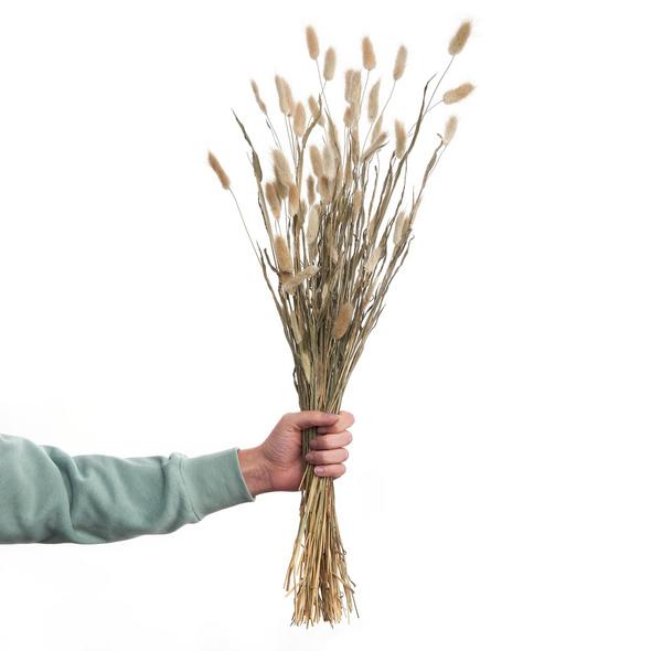 FLOWER MARKET Lagurus Gras, getrocknet