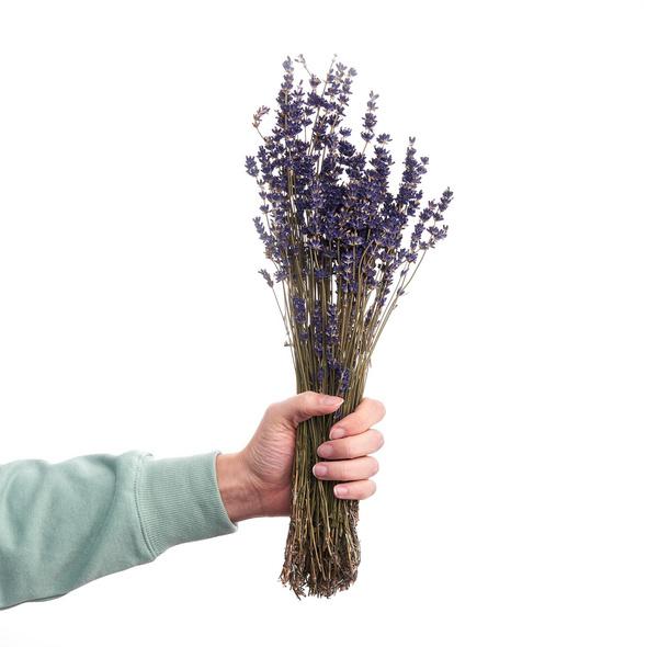 FLOWER MARKET Lavendel, getrocknet