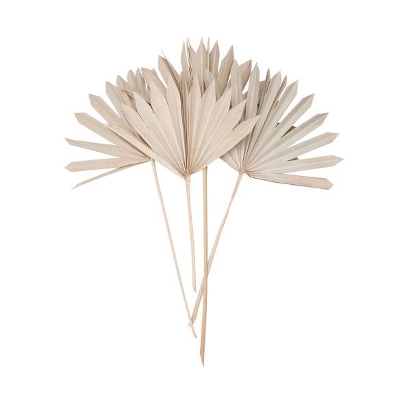 FLOWER MARKET Palmblatt groß 4 Stck. Nat