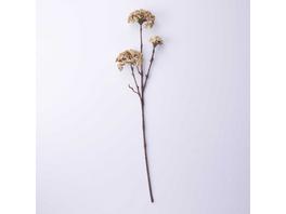 FLORISTA Zierpflanze Wilde Möhre, creme