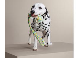 Hunde-Wurf-und-Wasser-Spielzeug